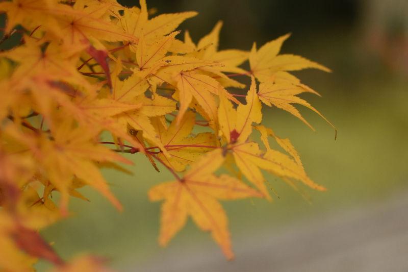 熊野本宮大社の紅葉