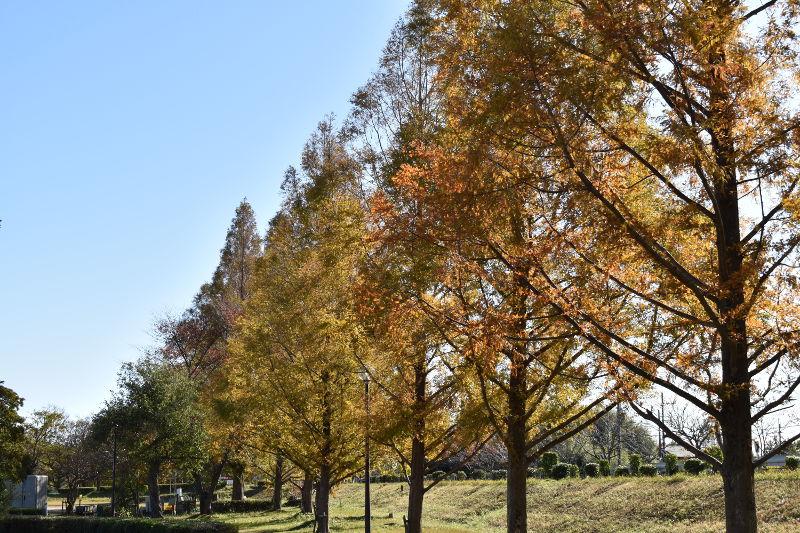 六ツ矢崎浜オートキャンプ場の並木
