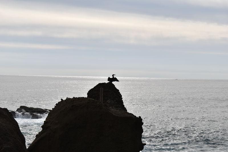 鬼ヶ城の海鵜