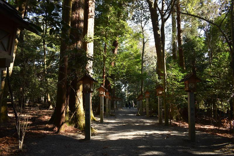 椿大神社の杜