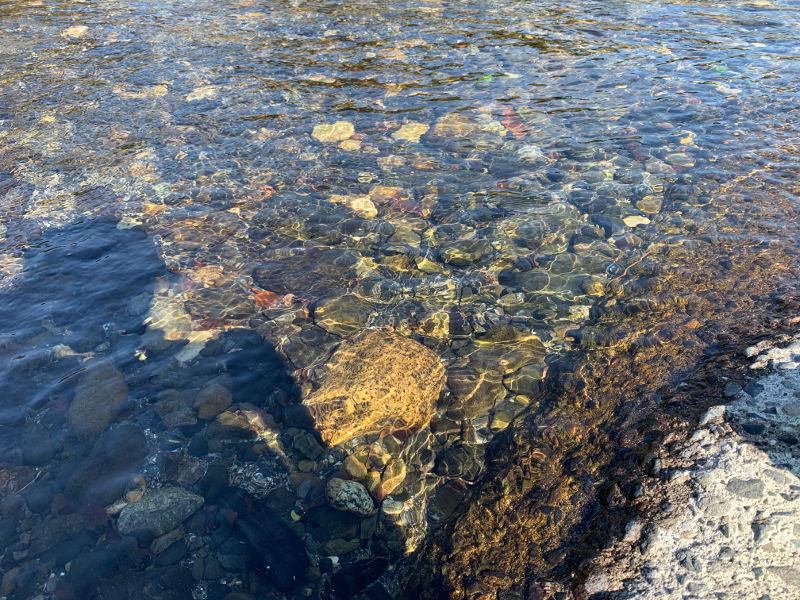 粕川の水質